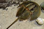 Nam bệnh nhân bị liệt toàn thân, suy hô hấp nặng do ăn con so biển