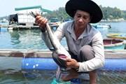 Vụ cá bớp chết ở Bình Sơn: Công bố kết quả xét nghiệm mẫu cá, mẫu nước