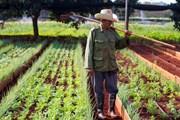Nông nghiệp Cuba chịu thiệt hại nặng nề do lệnh cấm vận của Mỹ