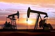 Sản lượng khai thác dầu của OPEC giảm nhẹ trong tháng 11