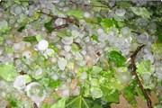 Mưa đá và gió mạnh xảy ra tại nhiều địa phương của Lào Cai