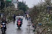 [Photo] Hà Nội rực rỡ sắc đào, lê rừng về phố đón rằm tháng Giêng