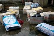 600kg lợn sữa đã biến màu bốc mùi hôi thối định tuồn ra thị trường