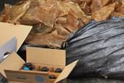 Bắt giữ hơn nửa tấn bì lợn ôi thiu chuẩn bị đưa đi tiêu thụ