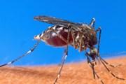 Trái Đất nóng lên tạo điều kiện cho virus Tây sông Nile lây lan nhanh