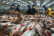 Tìm giải pháp cho việc cá tra xuất sang Mỹ sụt giảm kim ngạch