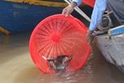Hà Nội thực hiện nghi lễ phóng sinh hơn 5 tấn cá xuống sông Hồng