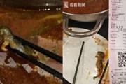 Tuyên bố gây sốc của chủ quán khi khách vớt được chuột trong nồi lẩu