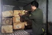 Lâm Đồng: Khen thưởng tập thể, cá nhân bắt giữ vụ vận chuyển gỗ pơmu