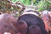 Đối tượng chở gỗ lậu lao xe vào lực lượng chức năng rồi bỏ chạy