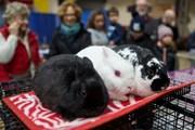 Những con vật đáng yêu tại Hội chợ Nông nghiệp Hoàng gia Toronto