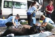 Hải Phòng: Giải cứu kịp thời hai cá thể gấu ngựa con