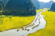 Ngắm mùa vàng Tam Cốc đẹp nao lòng trong ngày khai hội