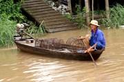 [Photo] Người dân An Giang thấp thỏm mưu sinh mùa lũ muộn