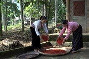 Hòa Bình: Mùa dổi bội thu đem lại thu nhập cao cho người dân