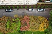 Con đường lá vàng đẹp ngất ngây tại Đại học Sư phạm Hà Nội