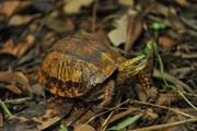 Ngôi nhà chung của những loài rùa quý hiếm tại Cúc Phương