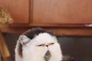 Những chú mèo có ngoại hình độc lạ thu hút mọi ánh nhìn