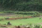 [Video] Khu đất vàng bị bỏ hoang suốt hơn 20 năm tại Sơn La