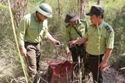 Tăng cường tuần tra, bảo vệ rừng Vườn quốc gia Yok Đôn