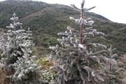 [Photo] Băng tuyết phủ kín nhiều nơi trên Cao nguyên đá Đồng Văn