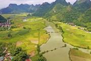 [Photo] Mùa lúa chín vàng trên cánh đồng Trùng Khánh ở Cao Bằng