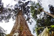 Truyền thông quản trị rừng cần theo sát những thay đổi của chính sách