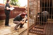 Đưa cá thể gấu ngựa thứ 199 về 'ngôi nhà gấu lớn nhất Việt Nam'