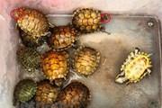 Nhận diện các loài ngoại lai xâm hại gây mất cân bằng sinh thái