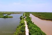 Yêu cầu dừng ngay các hoạt động gây suy thoái vùng đất ngập nước