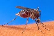 Séc phát hiện trường hợp đầu tiên bị nhiễm virus Tây sông Nile