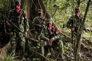Colombia: ELN trả tự do cho 6 con tin bị bắt cóc từ tháng Tám