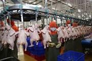 Công ty cổ phần Chăn nuôi C.P rót 1.000 tỷ đồng đầu tư tại Bình Định