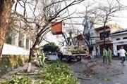 [Photo]Tuyên Quang: Lốc xoáy nhổ bật cây xanh, thổi tung nhiều nóc nhà