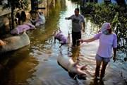 [Video] Trung Quốc đối mặt nguy cơ bùng phát dịch bệnh sau lũ lụt