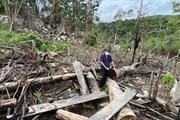 """[Photo] Phú Yên: Rừng phòng hộ đầu nguồn sông Trà Bương bị """"cạo trọc"""""""