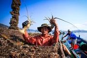 [Photo] Cận cảnh nghề nuôi tôm hùm của ngư dân tỉnh Phú Yên