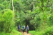 [Photo] Khám phá vẻ đẹp của Vườn quốc gia Cúc Phương
