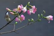 [Photo] Sắc hoa mùa Xuân rực rỡ tại nhiều địa phương ở Trung Quốc