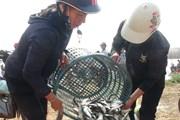 [Photo] Ngư dân Quảng Bình được mùa, được giá cá trích đầu năm