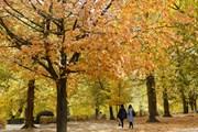 [Photo] Đắm mình trong cảnh đẹp mùa thu ngập sắc vàng ở châu Âu