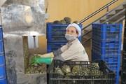 [Photo] Doanh nghiệp khẩn trương sản xuất trong bối cảnh đại dịch