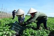 TCVN: 'Đòn bẩy' đưa sản phẩm nông nghiệp hữu cơ vào đời sống
