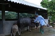 Lai Châu: Nâng cao tỷ lệ hộ gia đình sử dụng nhà tiêu hợp vệ sinh