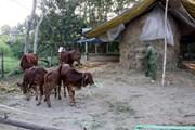 Gia Lai hỗ trợ xây dựng 570 nhà tiêu hợp vệ sinh tại 9 xã khó khăn