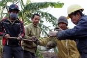 Nâng cao cảnh giác ngăn ngừa dịch hạch xâm nhập vào Việt Nam