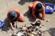 Quảng Ngãi tổ chức khai quật tàu cổ đắm tại vùng biển Dung Quất