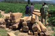 Gia Lai: Liên tiếp các vụ chống người thi hành công vụ về quản lý rừng