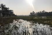 Thanh Hóa: 4.000l dầu của một chi nhánh xăng dầu tràn ra môi trường
