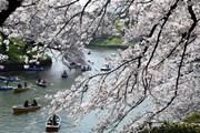 Nhật Bản bắt đầu thực hiện thu thuế du lịch quốc tế